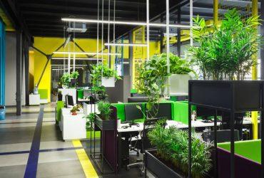 végétaliser l'environnement professionnel